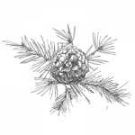 glacerie pyrénées